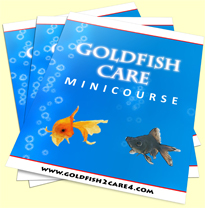 Feeding Goldfish The Healthy Way | Benefits and Tips