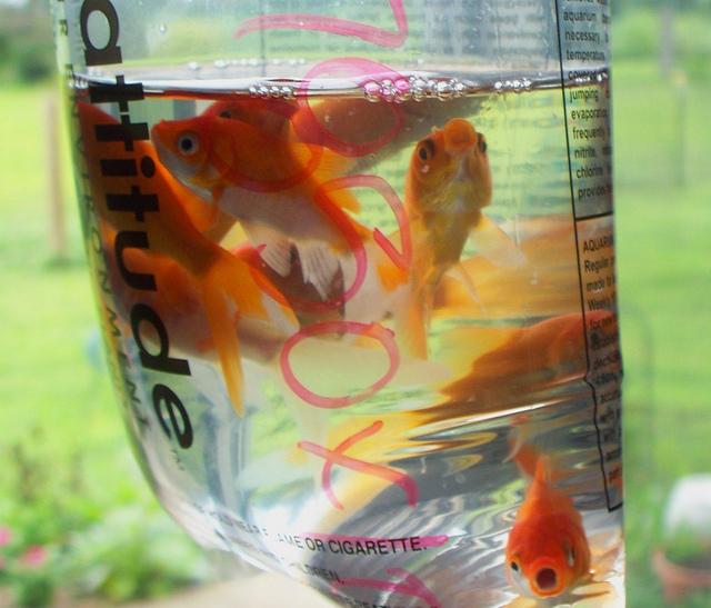 Goldfische Kaufen