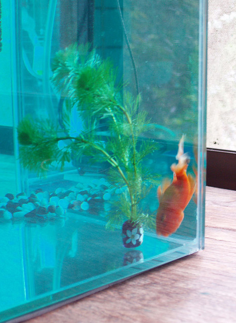 Goldfish Tanks Buying The Aquarium You Dream About Without