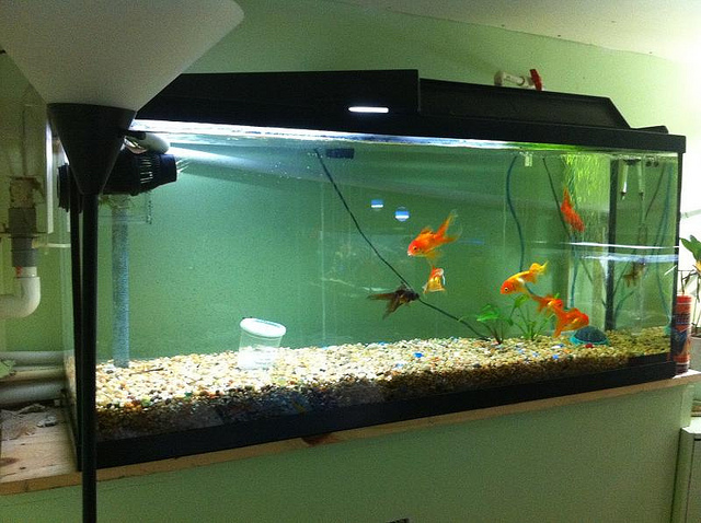 Good aquarium setup for a kitchen afreakatheart for Freshwater fish tank setup