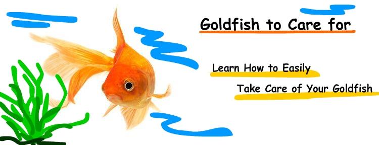 Goldfish History